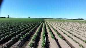 Langtidsvirkende bejdsemiddel højner dyrkningssikkerheden