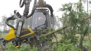 Skovforsker: Brug dog EU-træerne