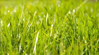 Styrelse minder om fristen for hovedafgrøden på marker med MFO-græsudlæg