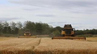 England ramt af udbyttenedgang i hvede på 30 procent