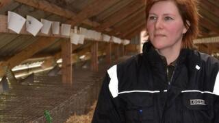 Avler: Med 60 millioner i dvaleordning er minkavl slut i Danmark