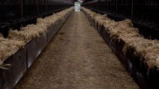 Rod i minkavlers indrapportering af corona