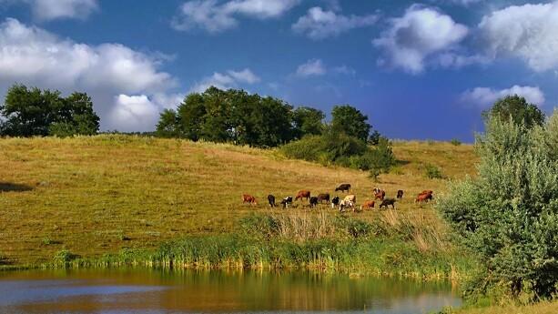 Naturstyrelsen sigtet for at overtræde dyrevelfærdsloven