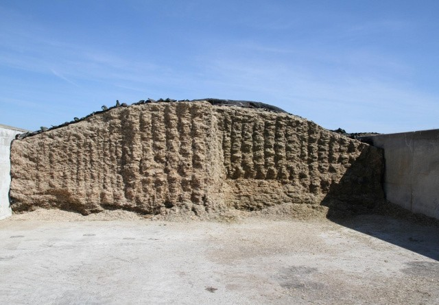 Grovfoderkvaliteten påvirker bundlinjen
