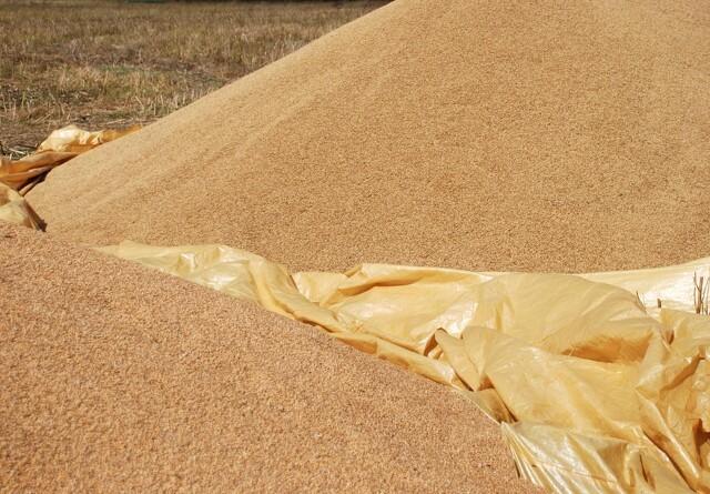 Sådan renser du bedst dit korn