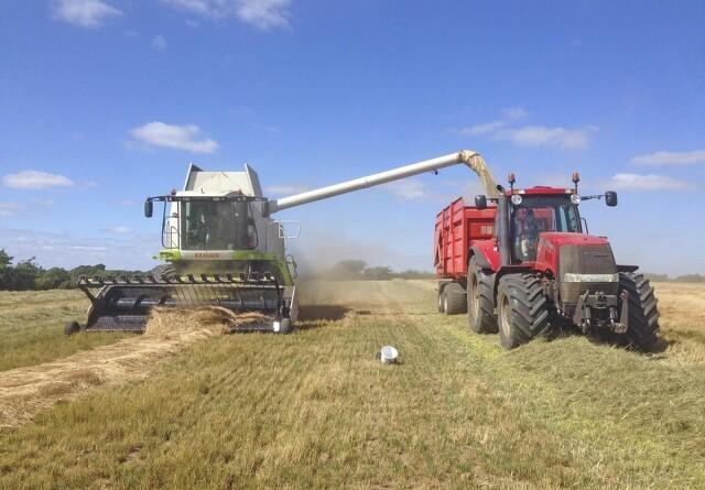 Markskribent: Afgrøderne i knæ for sommervejret