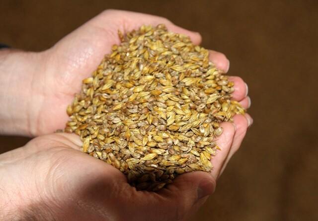 Mindre protein i kornet i år
