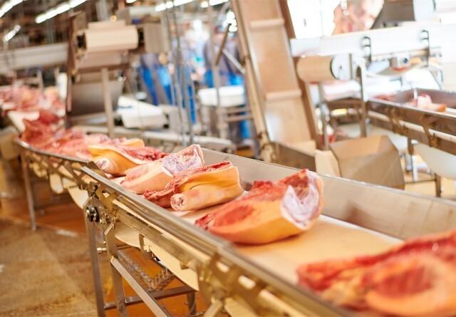 Øget eksport af svin til Kina denæste tre-fire år