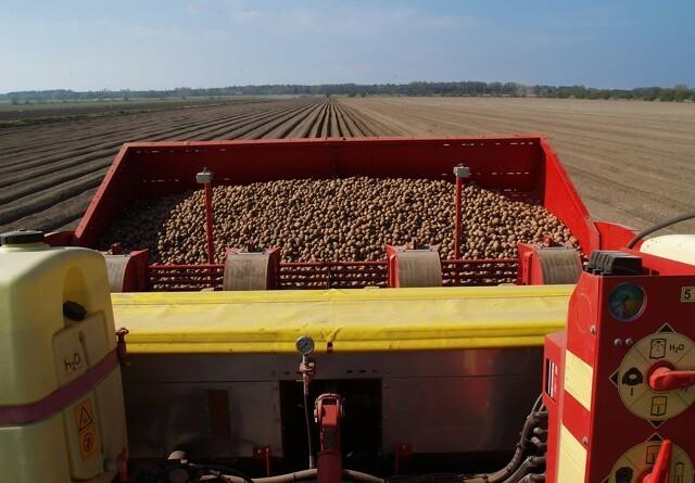 Vigtige tip, inden kartoflen bliver lagt i jorden
