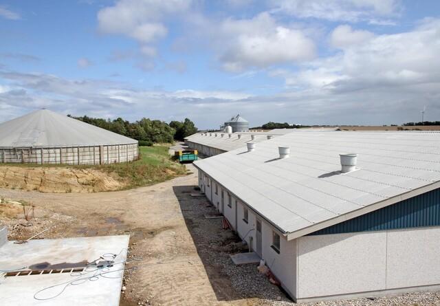 Luftrensning, gyllekøling og ventilation sikrer fremtiden for svineproduktioner