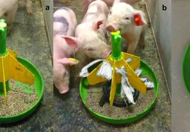 Ædelysten skal leges ind i grisene