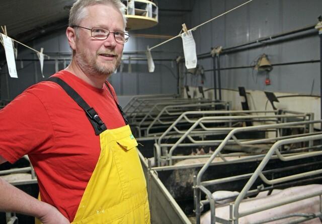 Vådfoder i farestald giver sunde søer og store grise