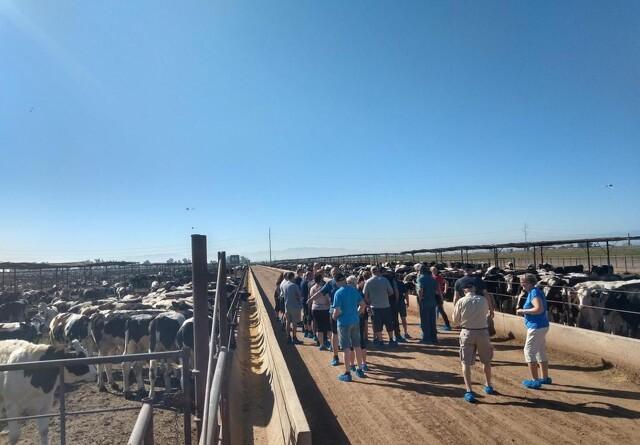 Danske kvæginteresserede på studierejse i Californien