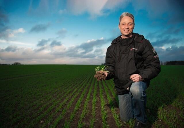 Vinterhvede som efterafgrøde giver ukrudtsudfordringer