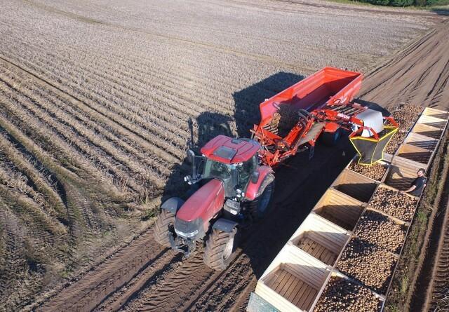 Bekæmp rodukrudtet inden næste års kartoffelsæson