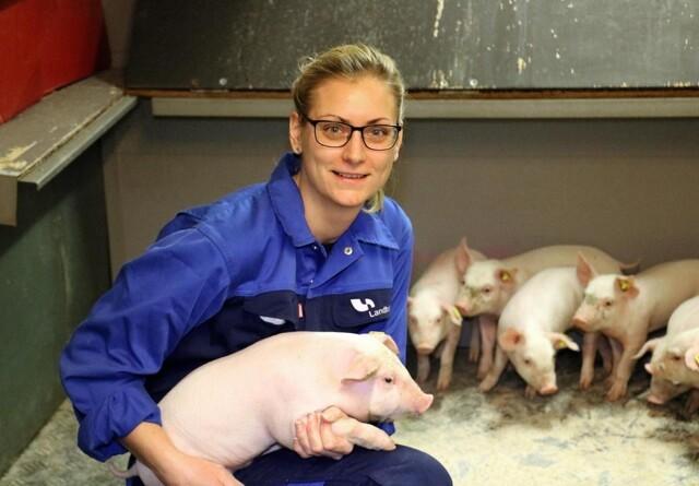 Nye foderstrategier og højere kødprocent giver gevinst i slagtesvineproduktionen