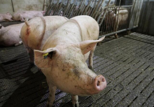 Er dine grise vigtige end Viden på Tværs i dag?