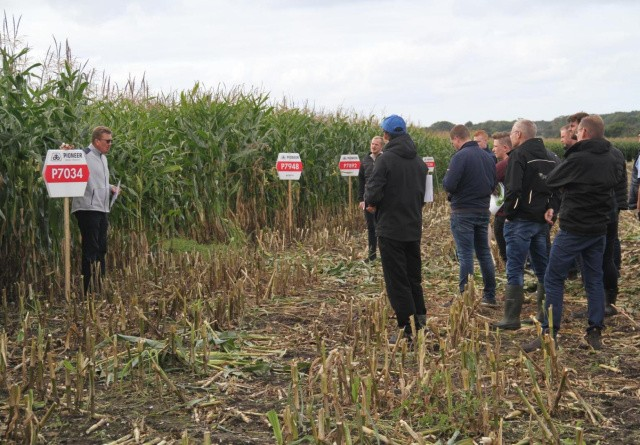 Håb om bedre udnyttelse af nyensilerede majs