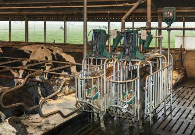 Nu kan koen komme på toilet
