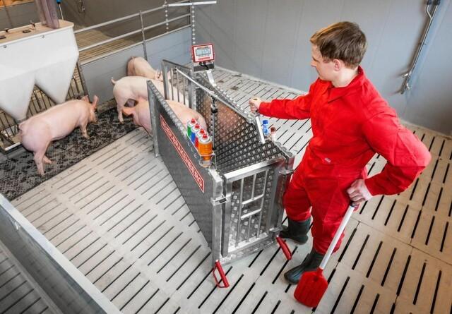 Forbedret svinevægt udstillet på EuroTier