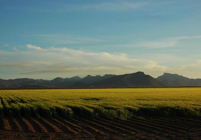 Tør atmosfære vil føre til lavere udbytter på verdensplan