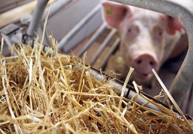 Bedre overblik over krav til dyrevelfærd