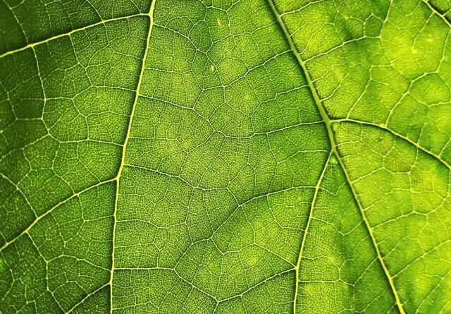 Forskning skal besvare flere spørgsmål om fotosyntese