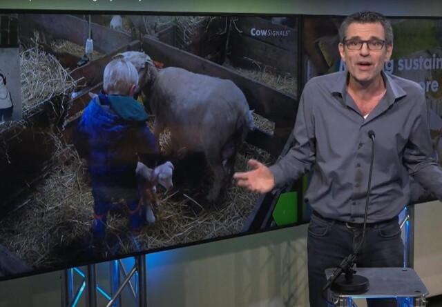 Realistisk at fordoble malkekøers levetid