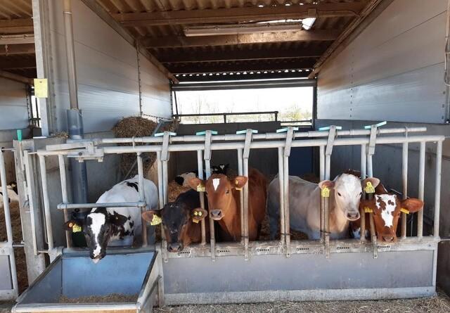Udenlandsk kød skal skubbes ud af køledisken