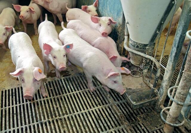 Husk hygiejnen omkring hjemmeblandet foder