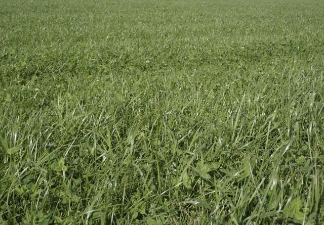 Dansk planteproduktion kan fordobles