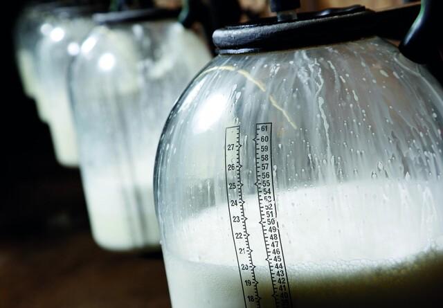 Tyske delstatsministre tager et skridt mod mindre mælk i EU
