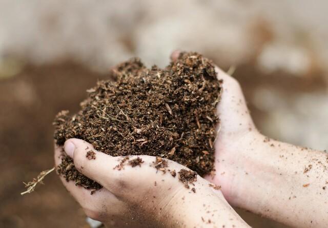 Jordens frugtbarhed - Mykorrhiza