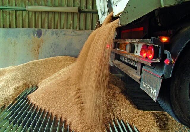 Skal kornet sælges i høst?