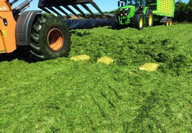 Naturlig ensilering af græs og majs