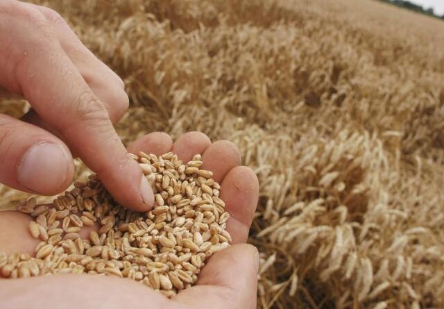 Afgrødepriserne vejrer morgenluft