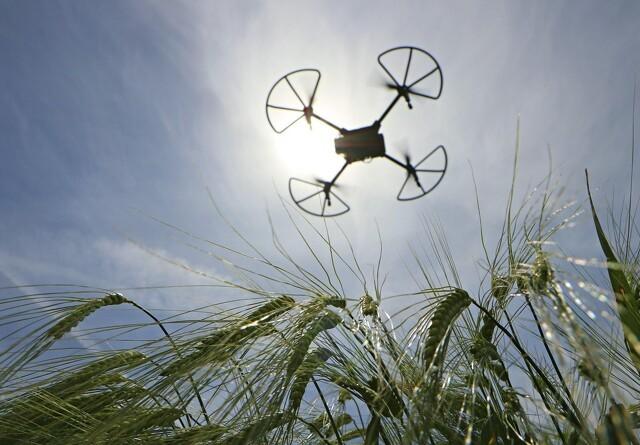 Droner skal finde plantesygdomme