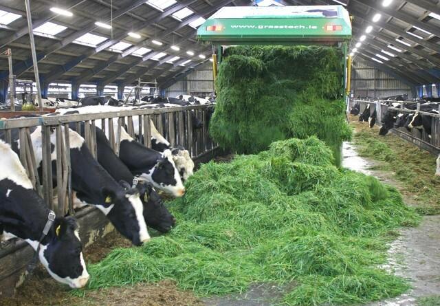 Frisk græs giver bedre økonomi