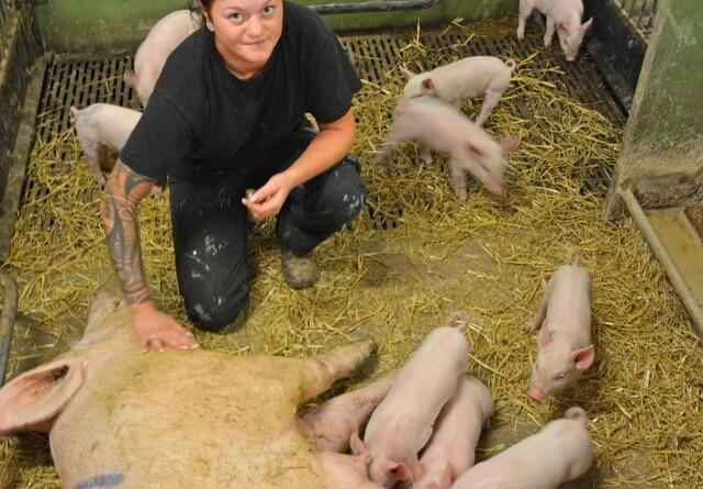 Ung svineproducent investerer i nybyggeri