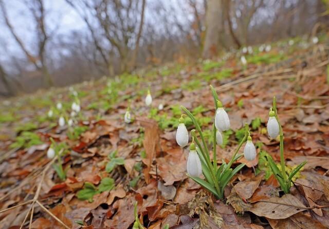 Foråret kom sent