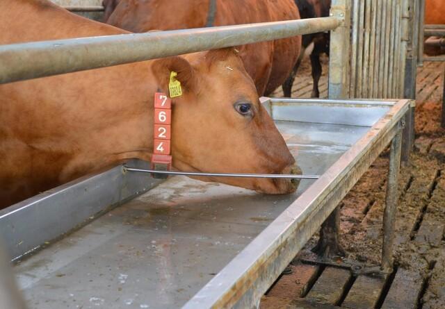 Behandlet drikkevand kan måske give lavere celletal og mere mælk