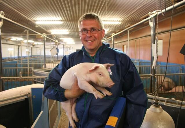 Enorm krise i svensk svineproduktion