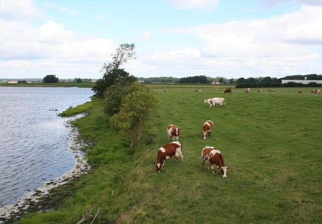 Dansk landbrug kan halvere udledningen af drivhusgasser