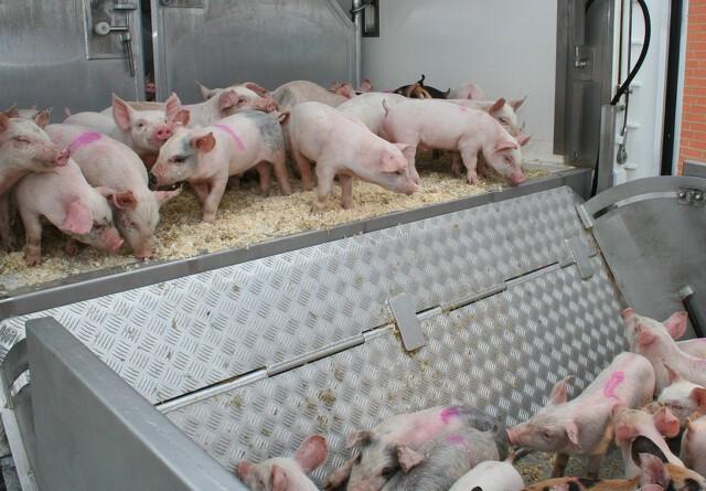 Dioxin-sag rammer dansk eksport