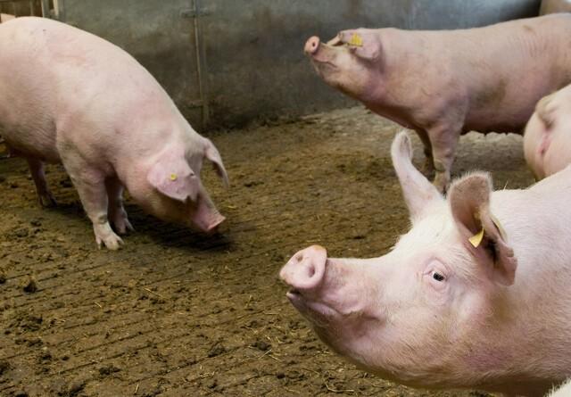 Kraftigt fald i antibiotikaforbrug