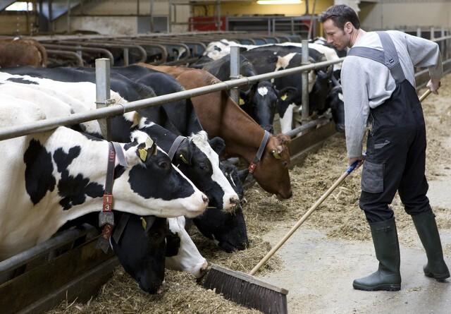 Op mod 1.000 landmænd har ulovlige stalde