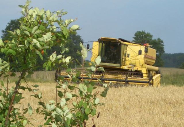 Nervøse landmænd håber på sol og vind