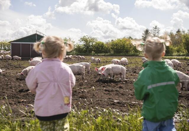 Besøg hos øko-grisene slår rekord