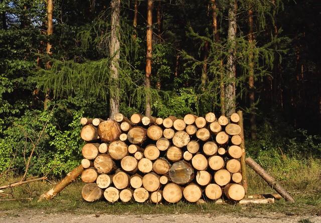 Økologisk Råd kritiserer fjernelse af brændeafgift
