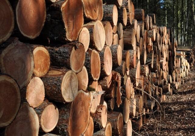 Skovfolk jubler: Sejr over brændeafgiften